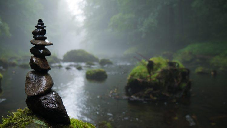 Viljan i skogen